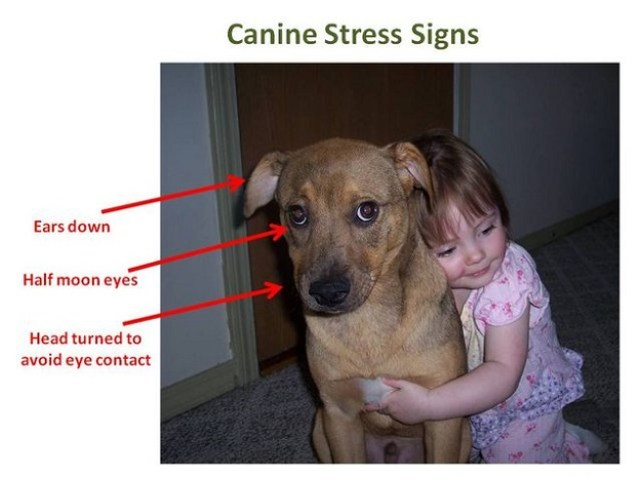 pas-grljenje-stres