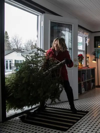 Wrestling with the Tree - Candy Cane Christmas - Tall