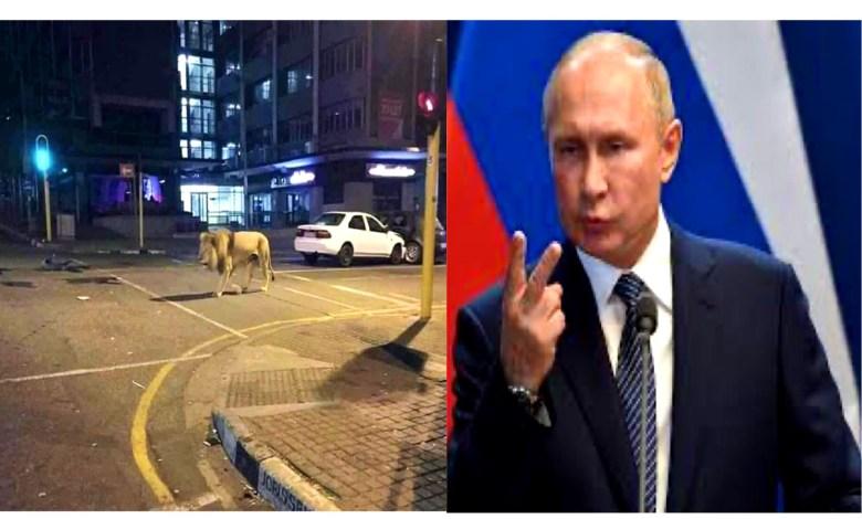 రష్యాలో ప్రజలు బయటకి రాకుండా సింహాలను వదిలారు? Russian govt released lions?