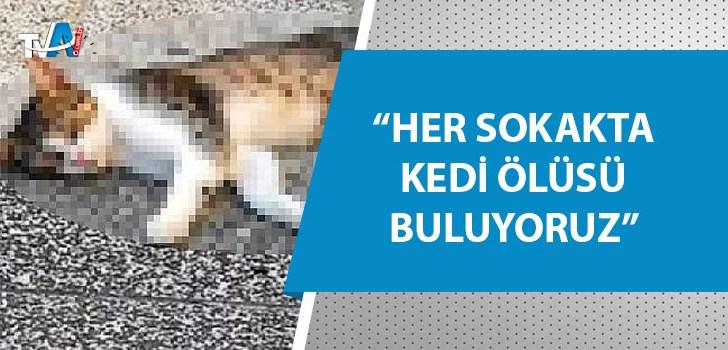 15 sokak kedisi zehirlenerek öldürüldü