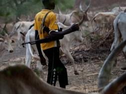 herdsmen-farmers