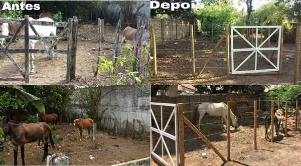 SÃO GONÇALO DOS CAMPOS: Prefeitura irá recolher animais soltos nas ruas e donos pagarão multa