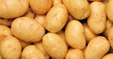 Voilà Pourquoi le Prix de la Pomme de Terre va Encore Augmenter en Algérie !Le Succès de la Filière de Pomme de Terre en Péril !