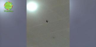 Murcielago encontrado en mall talca