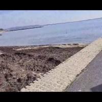 Mèze vue de la terre - Le port de Mèze