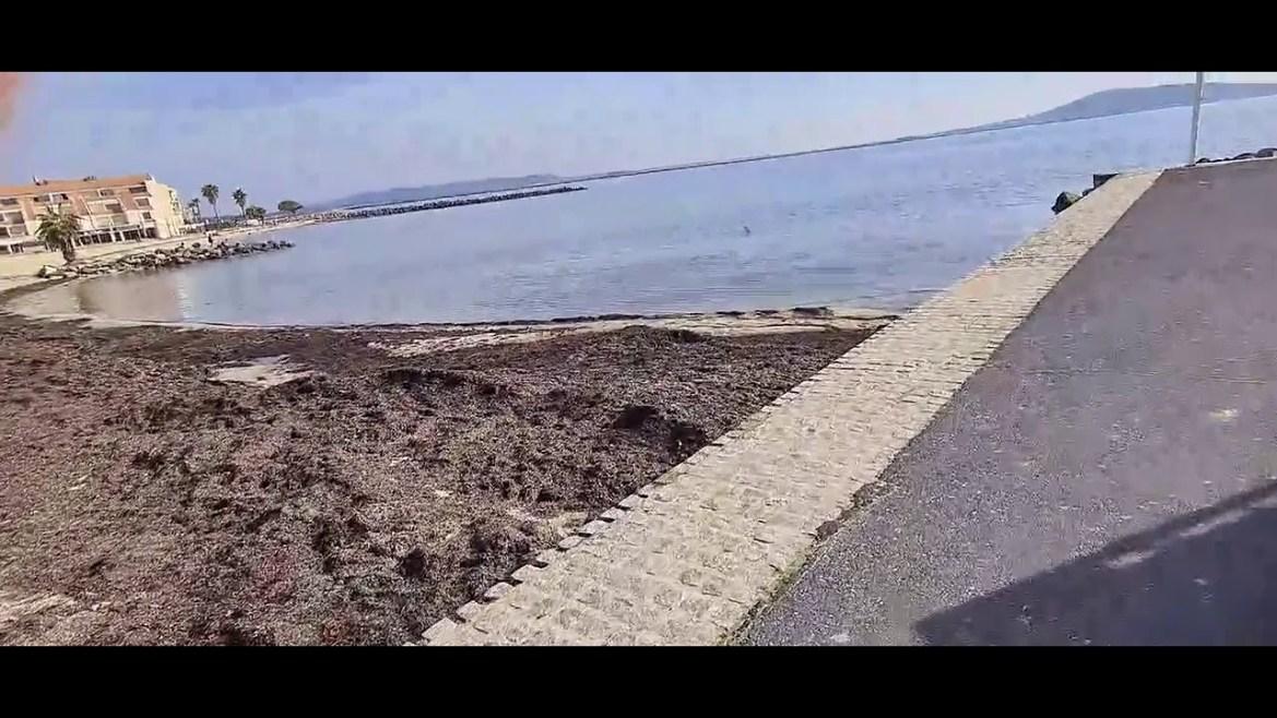 Mèze vue de la terre – Le port de Mèze