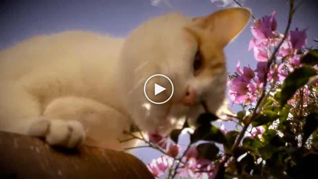 Katze aus meow meow lullaby von Nada Surf
