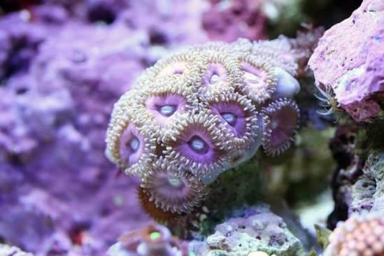 koralli magicheskie svoystva11