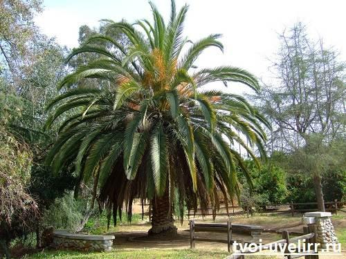 Вся-правда-о-пальмовом-масле-Вред-пальмового-масла-3
