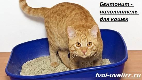 Что-такое-бентонит-Свойства-применение-и-цена-бентонита-7