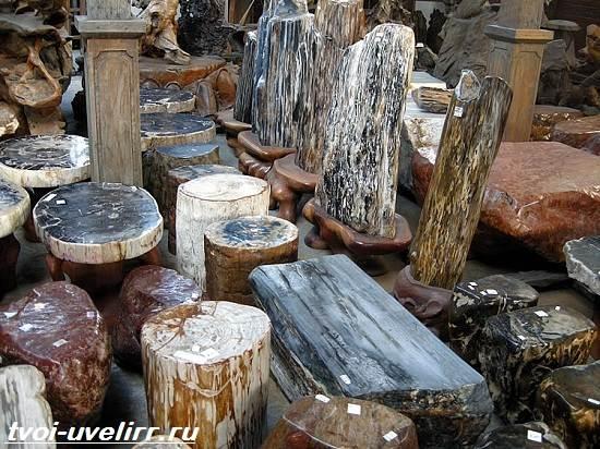 Что-такое-окаменелое-дерево-Свойства-добыча-применение-и-цена-окаменелого-дерева-7