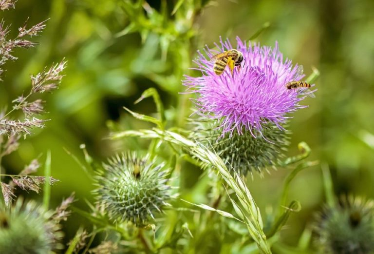 bee and thistle - rejoice in life
