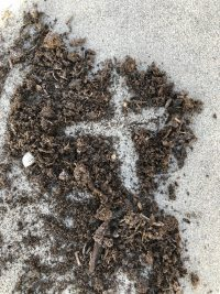 cross in ashes