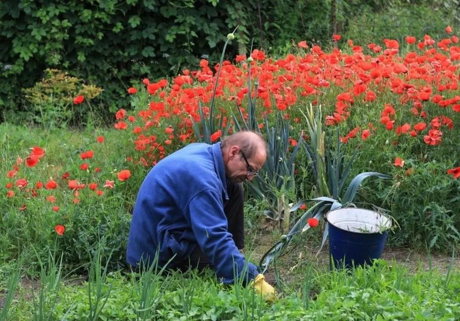 Planting, Watering, and Weeding