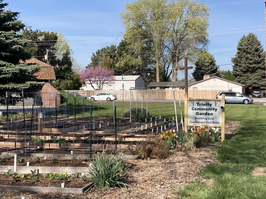 Read more about the article Life of a Community Garden