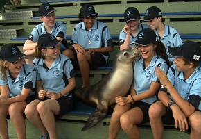 BLUE ZOO group with seal