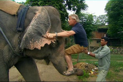 Animal charity drops Martin Clunes after elephant ride
