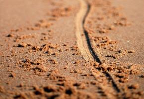 line-sand
