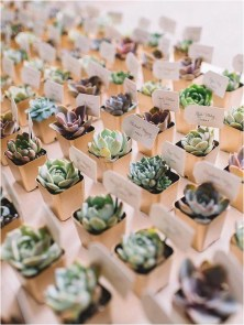 Succulents source tipsweddingplanningcom