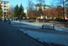 Drzewa w przestrzeni miejskiej tajemnicze i niezbędne istoty...
