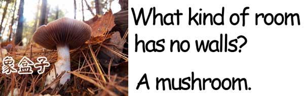 mushroom 蘑菇 香菇
