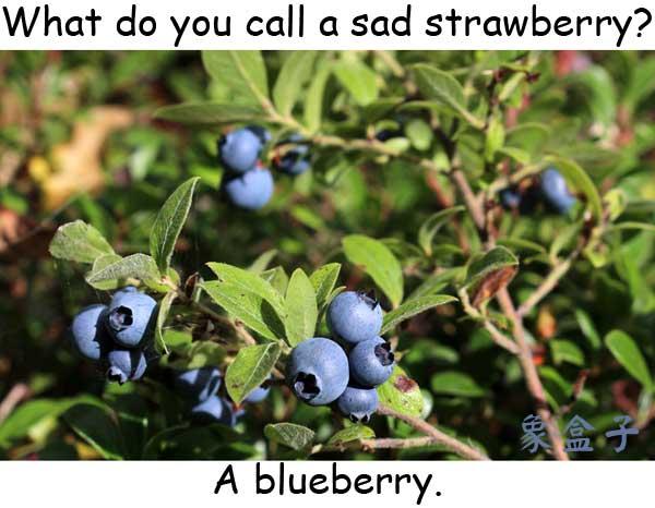 blue 藍色 沮喪 憂鬱 blueberry 藍莓 strawberry 草莓 berry 漿果 莓果