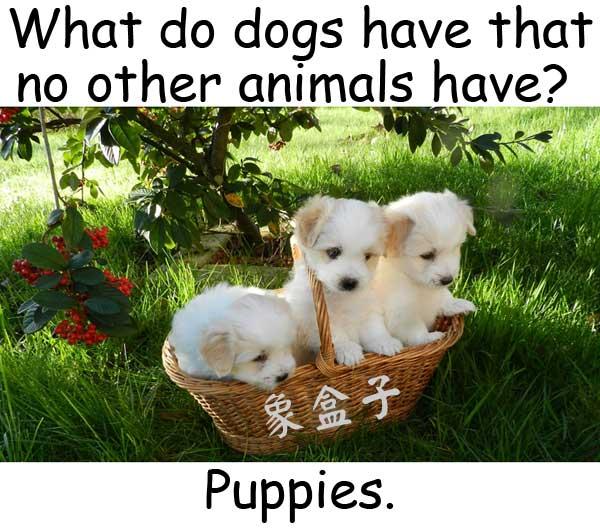 puppy 小狗 幼犬