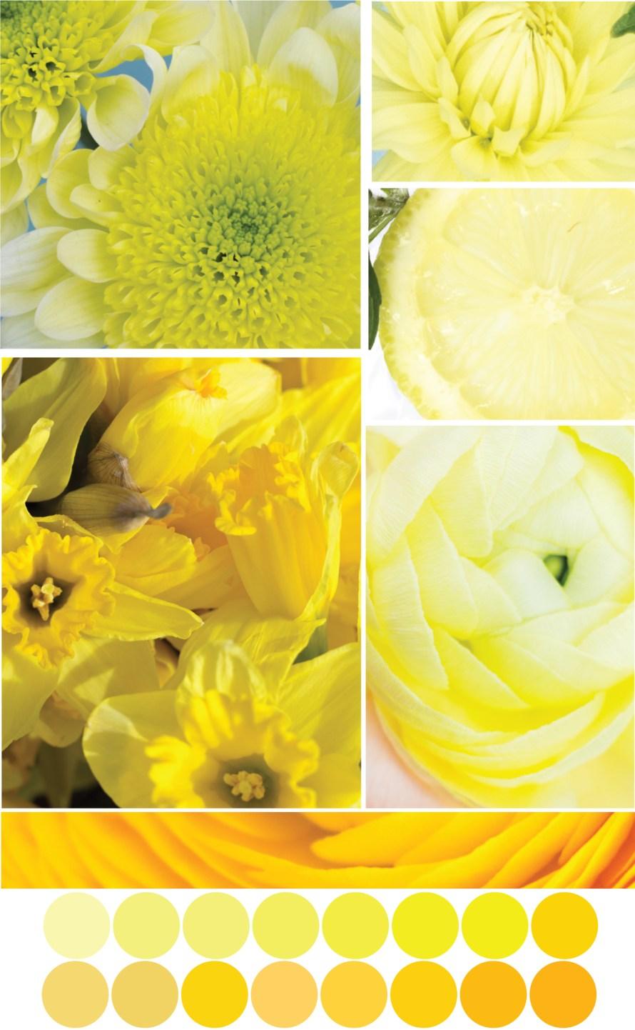Gelbe Farbpalette - Tweed & Greet