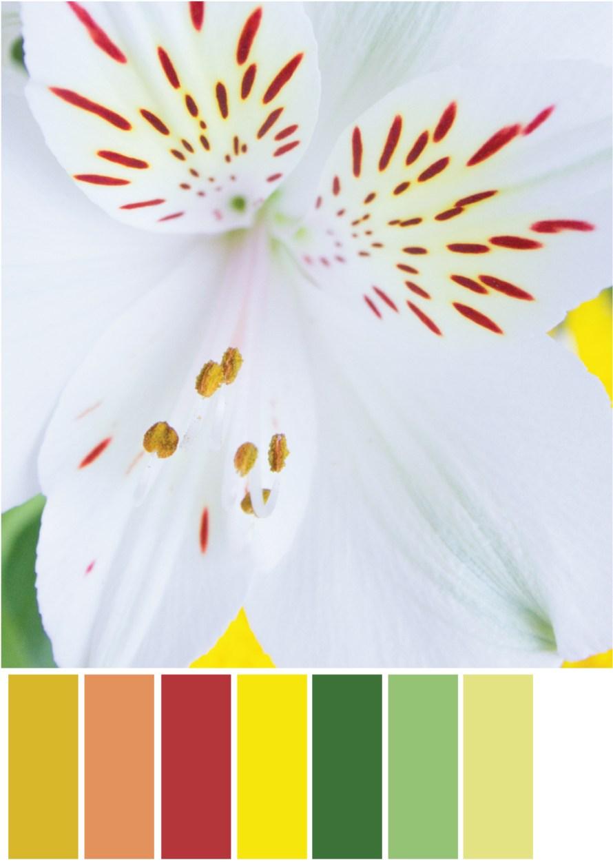 Orange Farbpaletten - Blütenblätter - Tweed & Greet