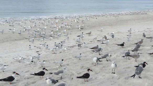Mixed waterbirds