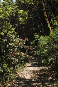 Walking trails, Kumaon