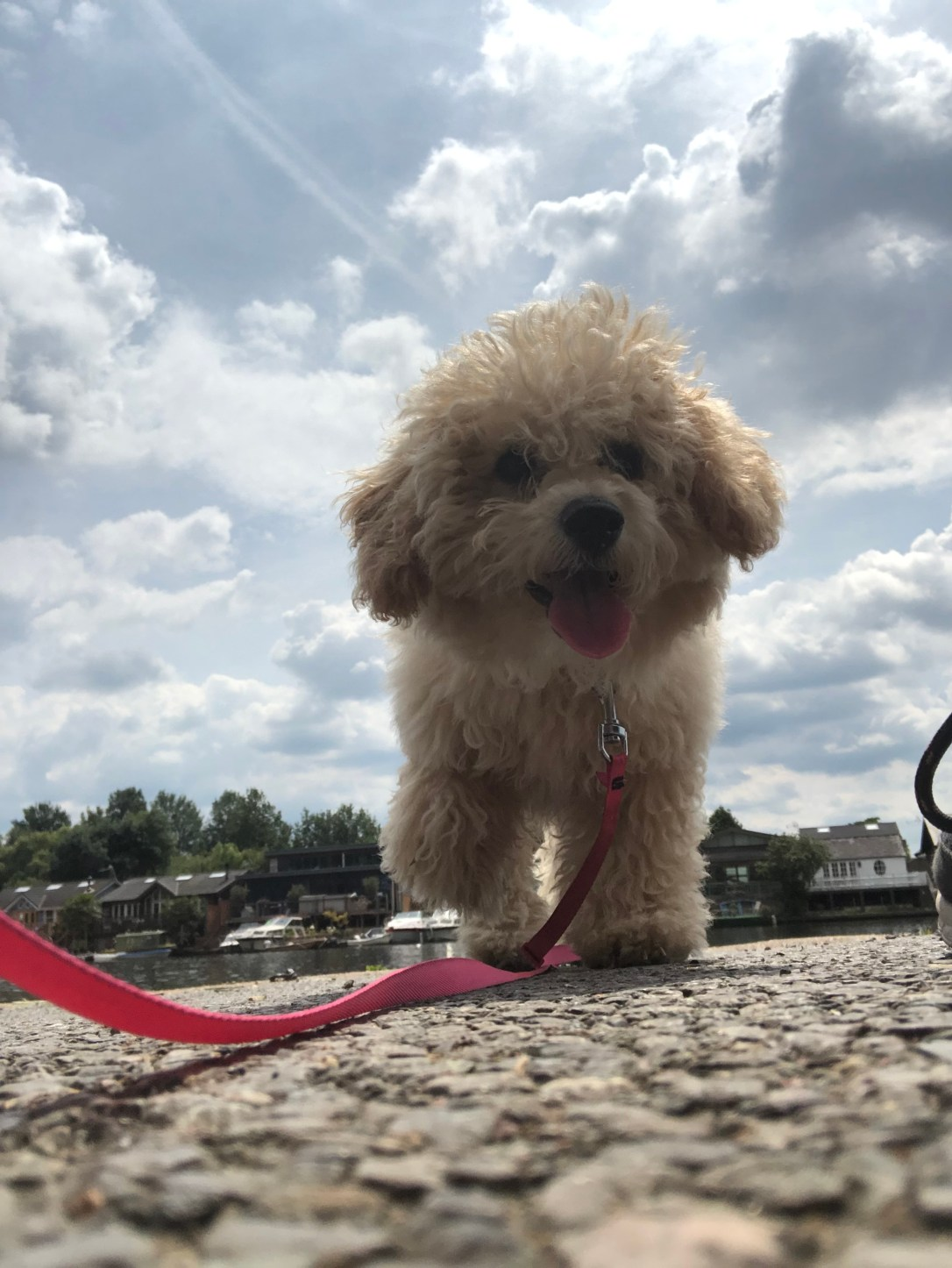 "alt=""ditch the routine for puppy Bailey means going for a calm walk on a sunny day"""