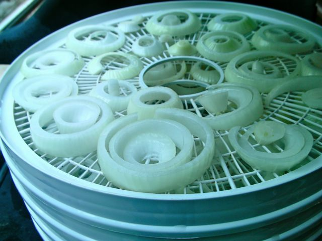Slices of onion on round racks ready to be dehydrated for winter storage