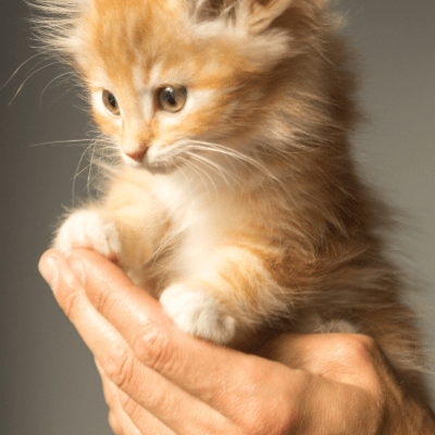 Kittens: Part 1