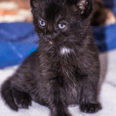 Kittens: Part 2