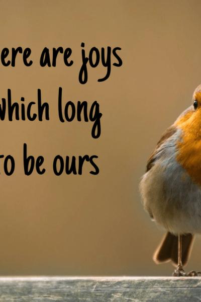 Bird sitting on a fence