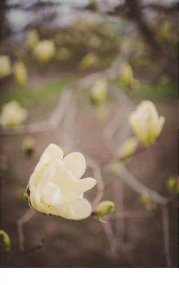 flowers, maternity sessions, madison mini's