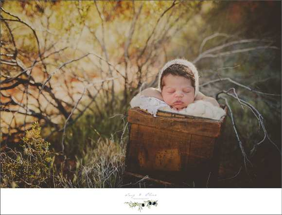 newborns, twig and olive photography, babies, bonnets,  blankets, swaddled, angelic, cherub, Fire Valley Las Vegas NV, Twig and Olive photography, newborn sessions
