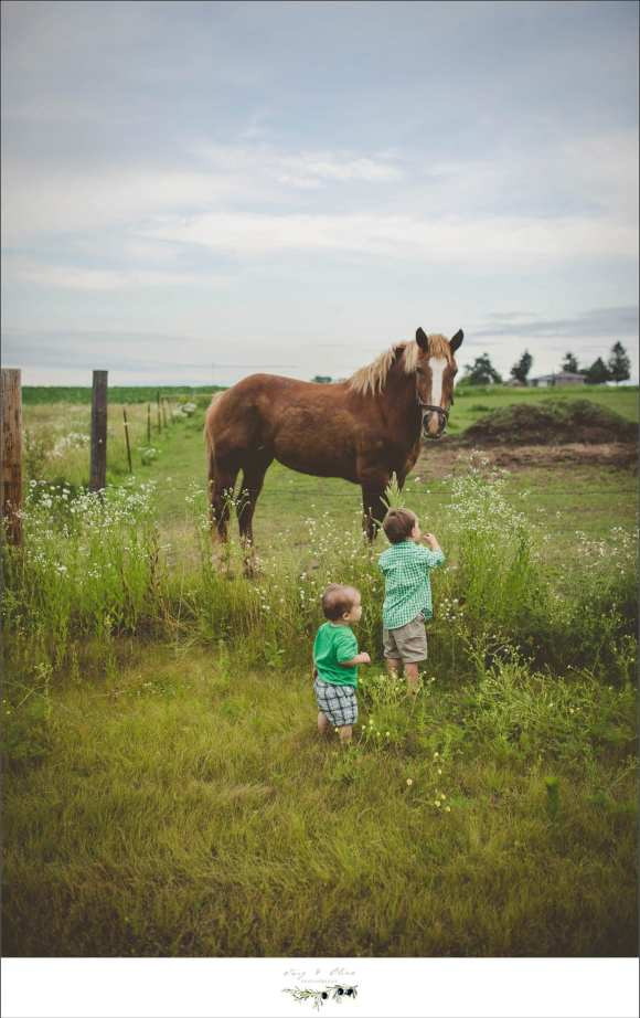 brothers, horses, rustic, fences, vintage, green grass, Twig and Olive families