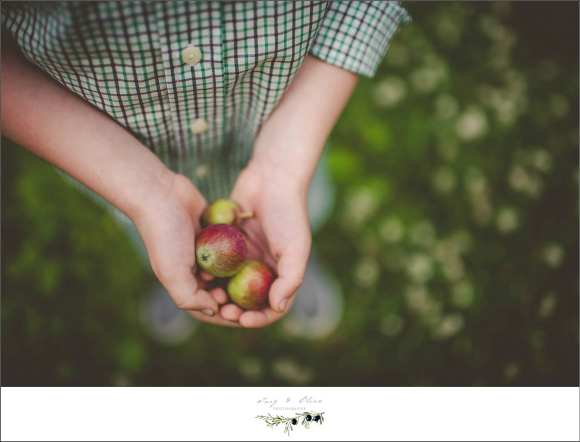 apples, tiny hands, details, greenery, Sun Prairie family sessions