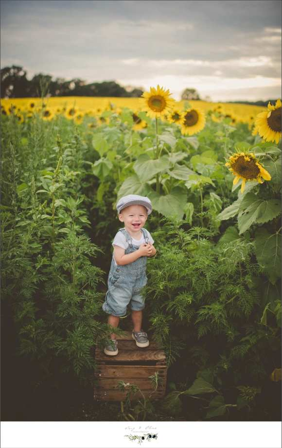 sunflowers, little conductor