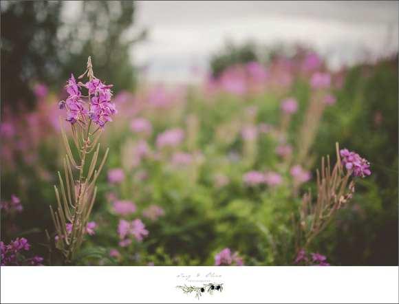 purple flowers, green grass