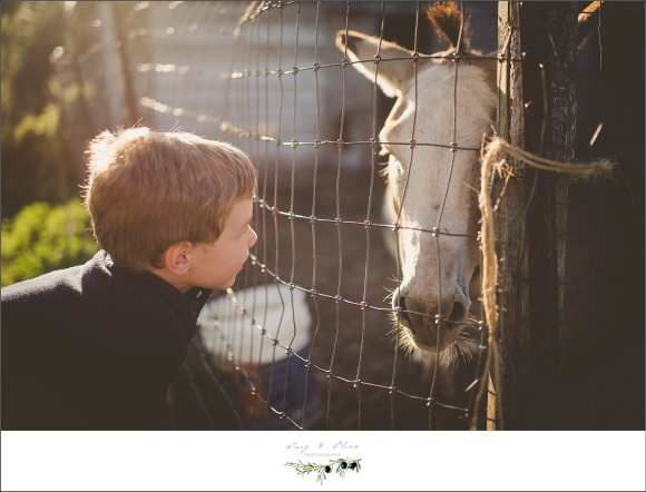 horses, boys, feeding animals