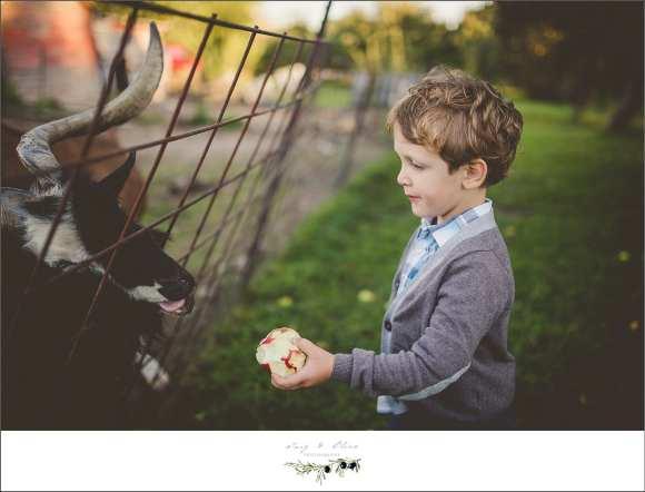goats ane kids