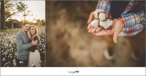 cotton field photography session
