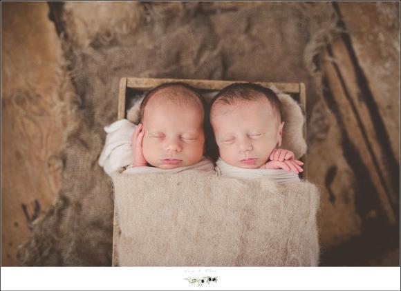 newborn pose for twins