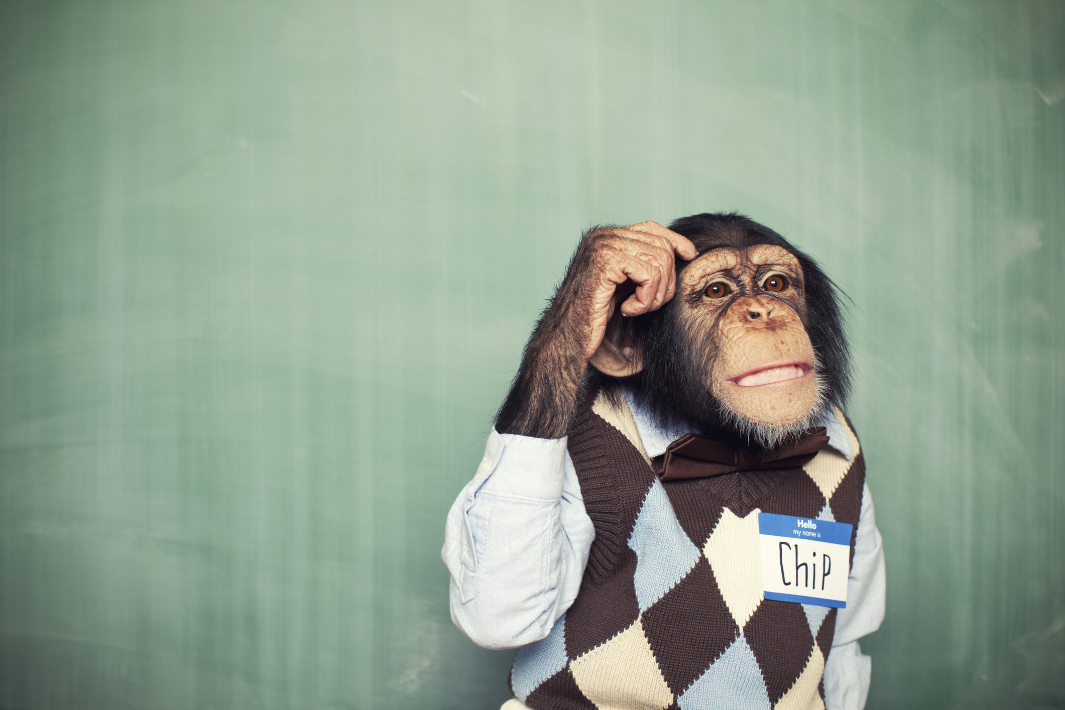 This nerdy chimpanzee is thinking really hard for a solution.