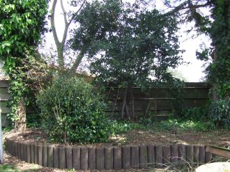 With the temporary chicken fence gone, most of the weeds have been dug out and the bay tree has been pruned into submission.