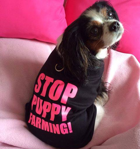 Lucy stop puppy farming