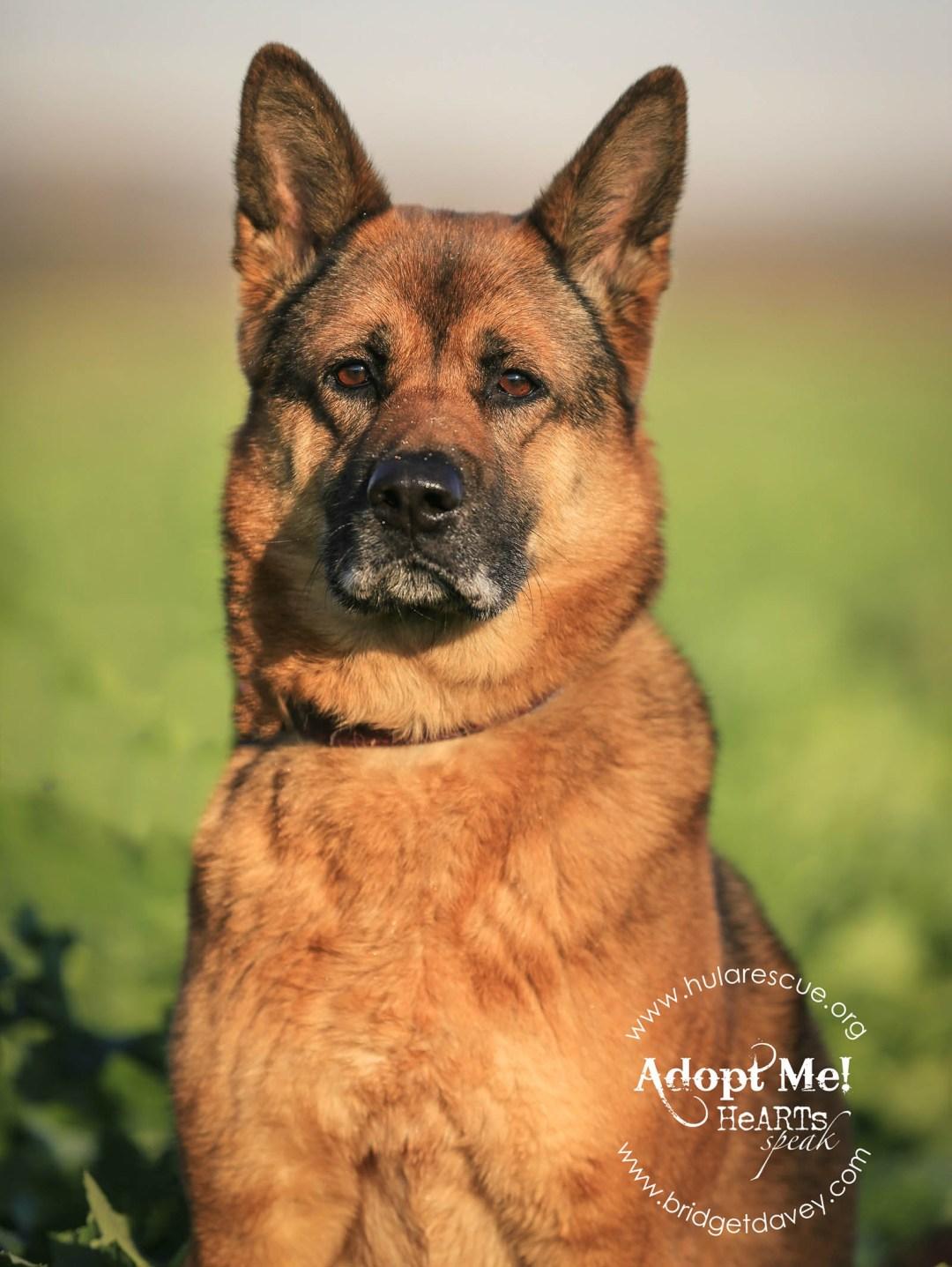 Ruby HULA Animal Rescue 1 (1)